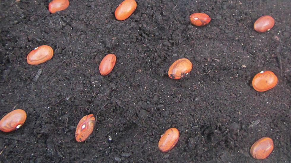 Keimt Mein Saatgut Noch Schweizer Garten