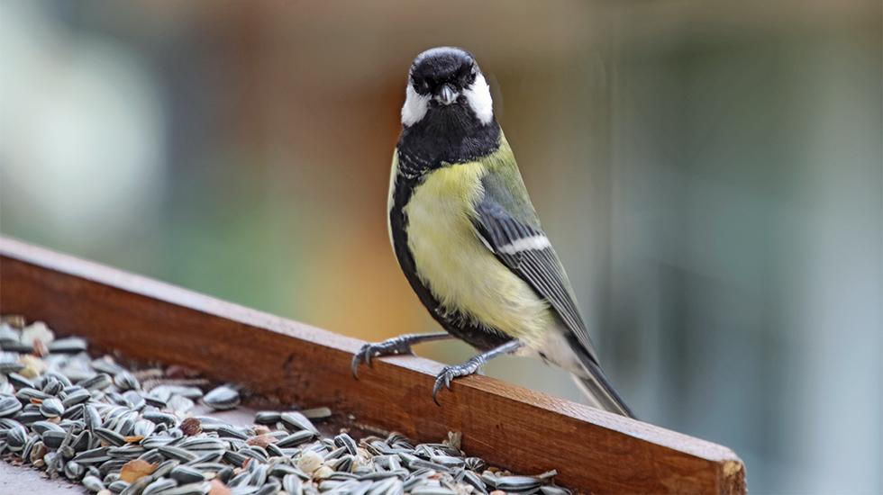 Vogelfütterung im Winter
