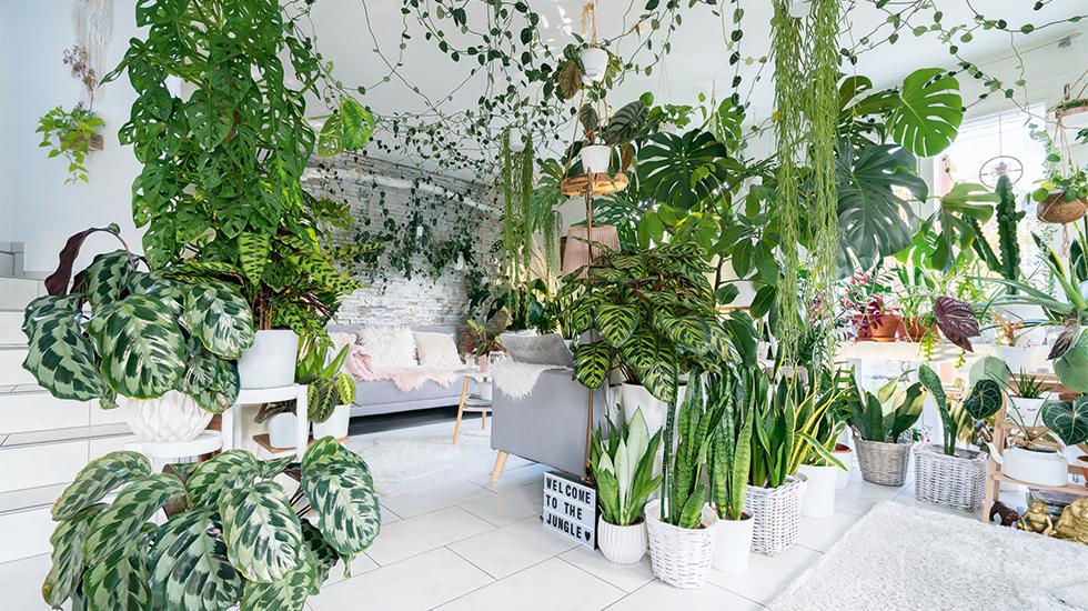 Verrückt nach Zimmerpflanzen