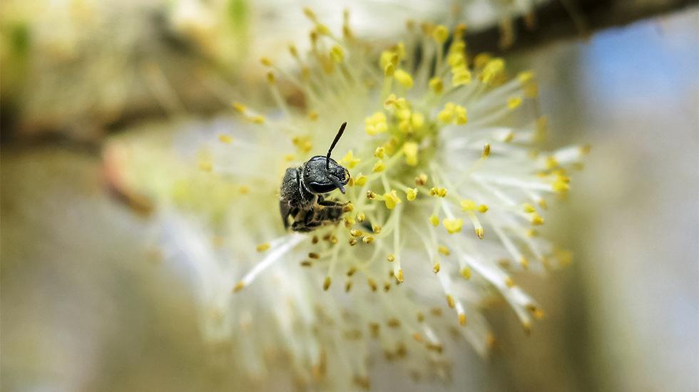 Bienenecke im Garten