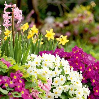 Duftgarten für alle Jahreszeiten