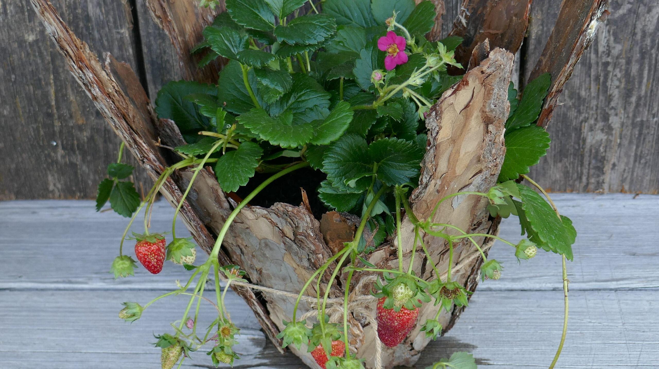 Erdbeeren im rustikalen Look