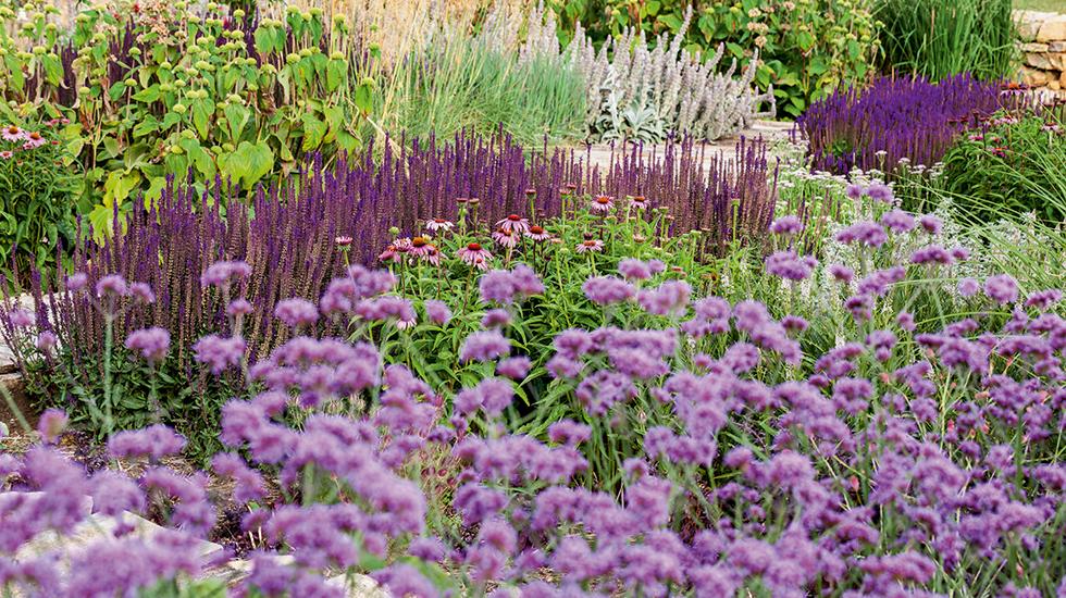 Die schönsten Salbei für den Garten