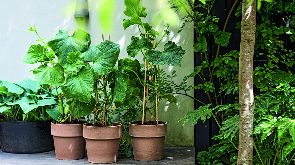 Gemüse für die Vertikale