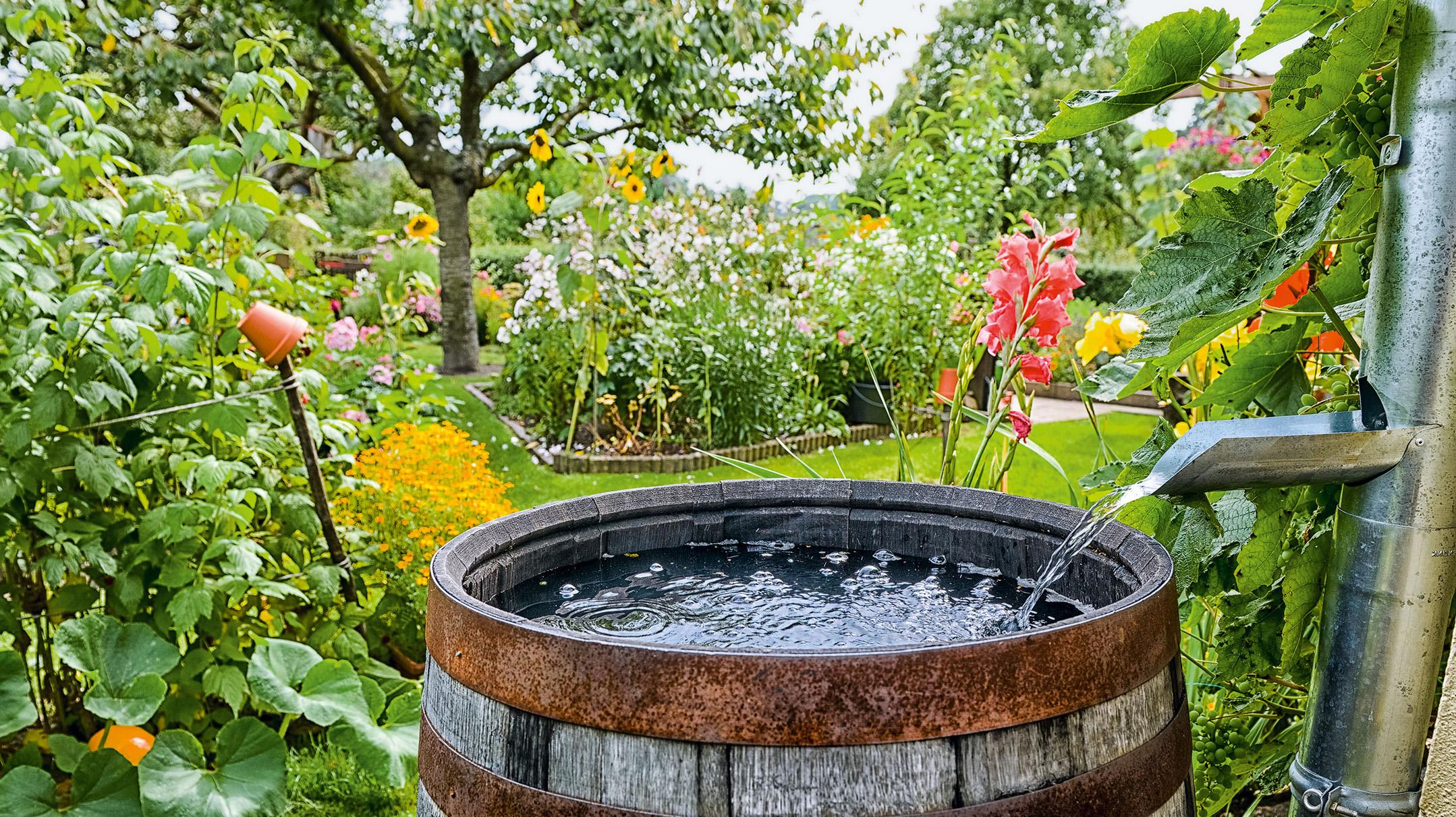 Für den Garten Regenwasser nutzen