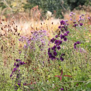 Piet Oudolf: Landschaften aus Pflanzen