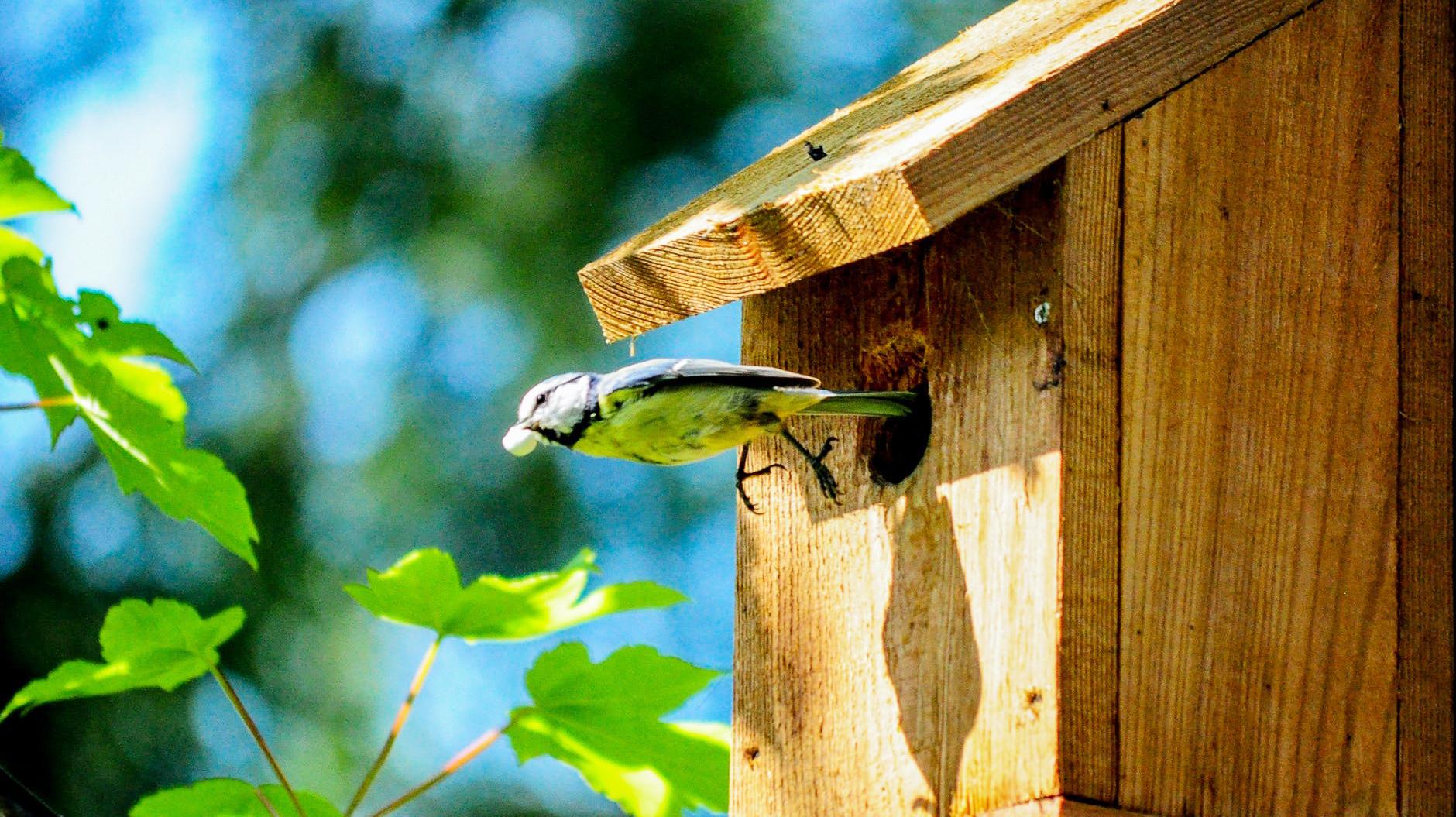 Nistkasten als Starthilfe für Vögel