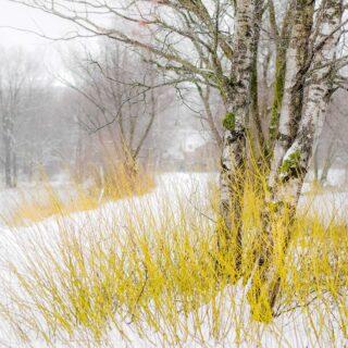 Bäume im Klimawandel