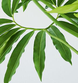 Zimmerpflanzen: Wohnen im Grünen