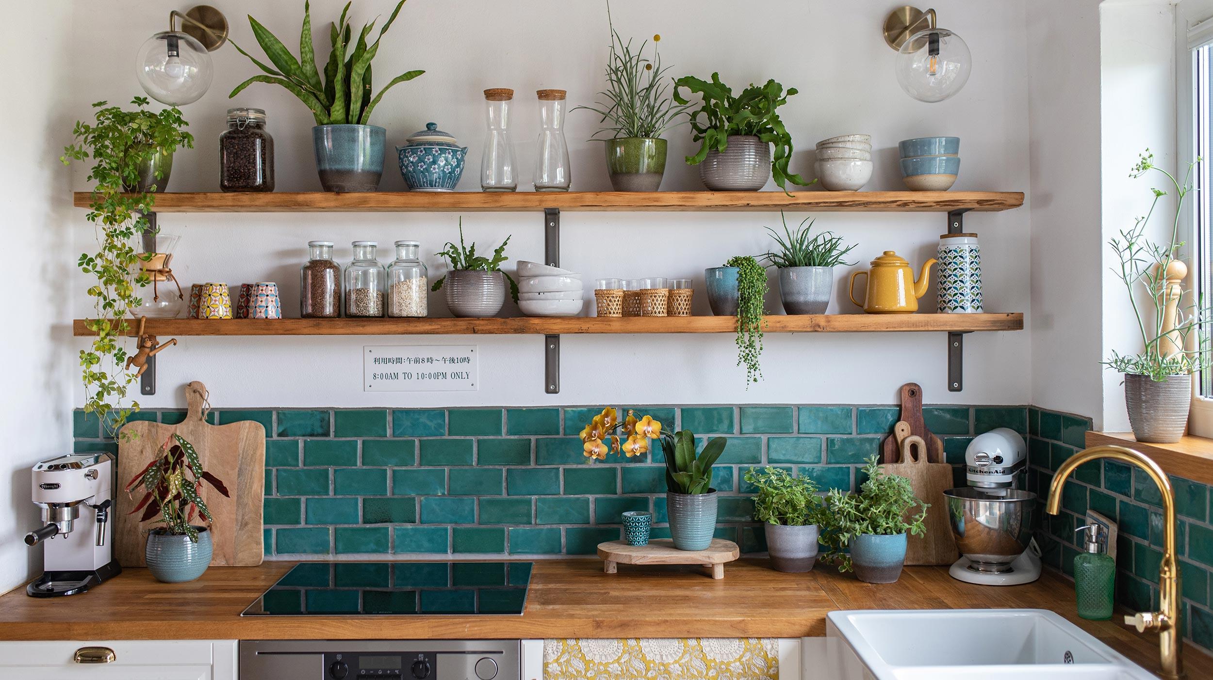 Zimmerpflanzen: Wohnen in Grün