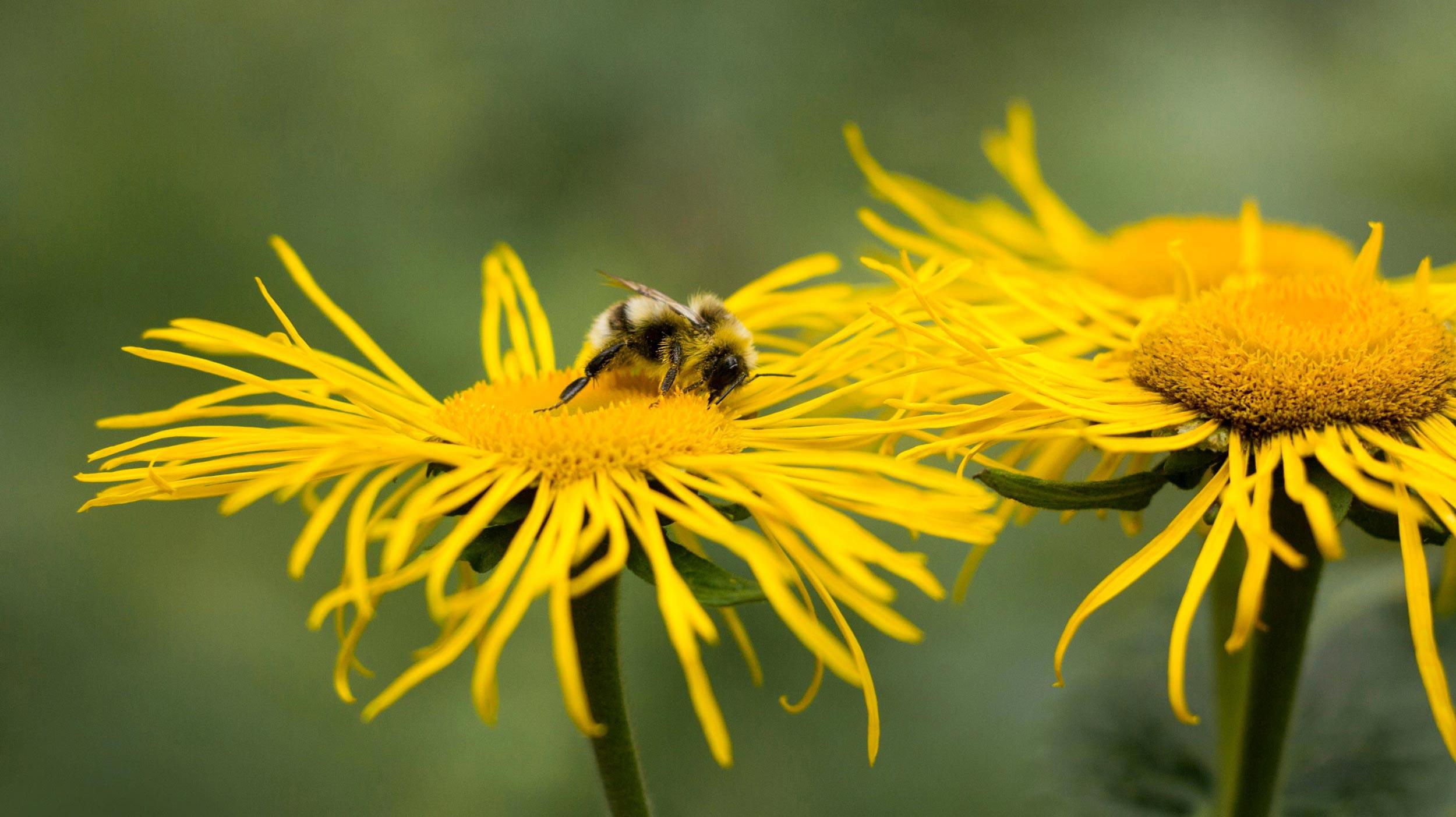 Biogarten: nachhaltig und naturnah