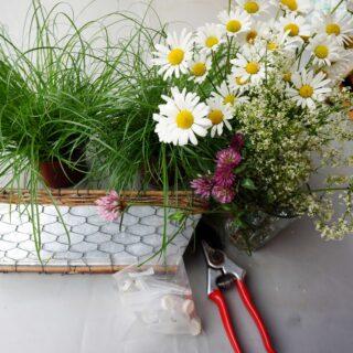 Blumenwiese für den Tisch