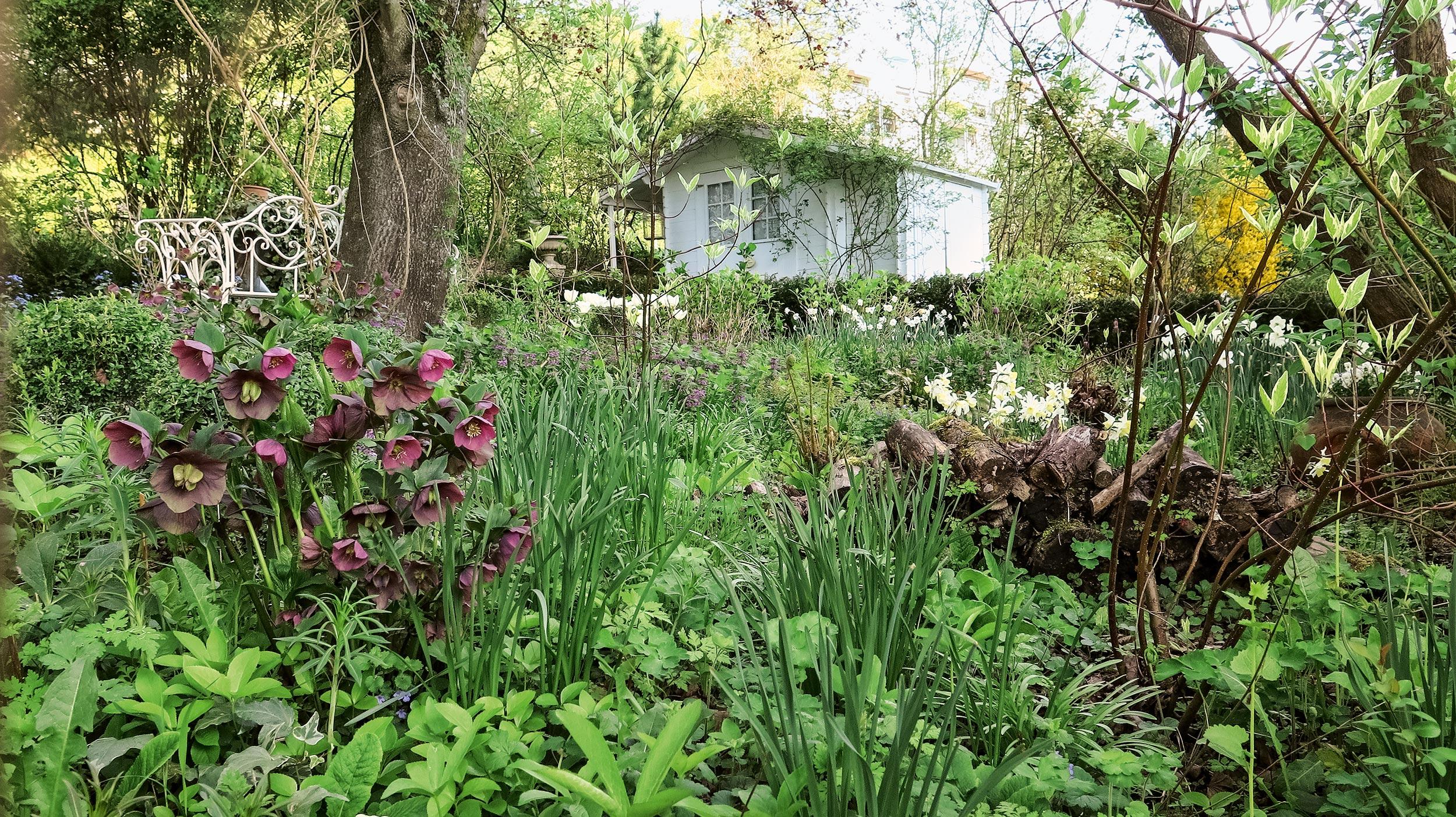 Frühling im Schattengarten