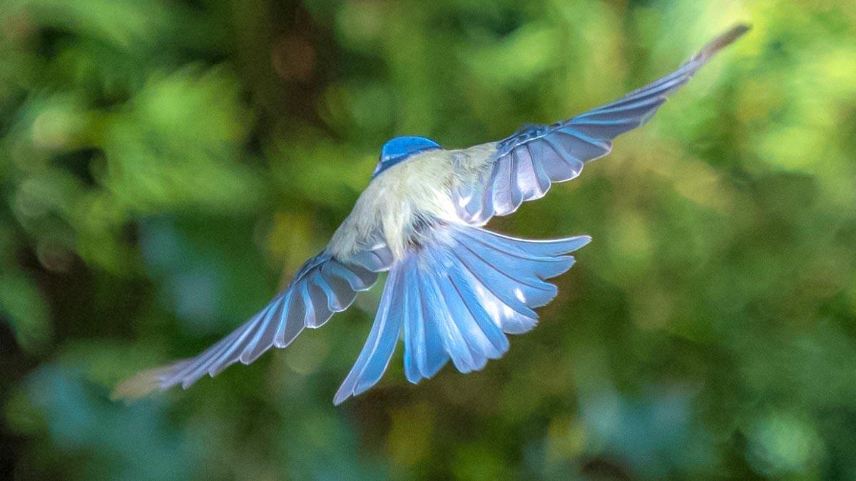Vögel im Hausgarten