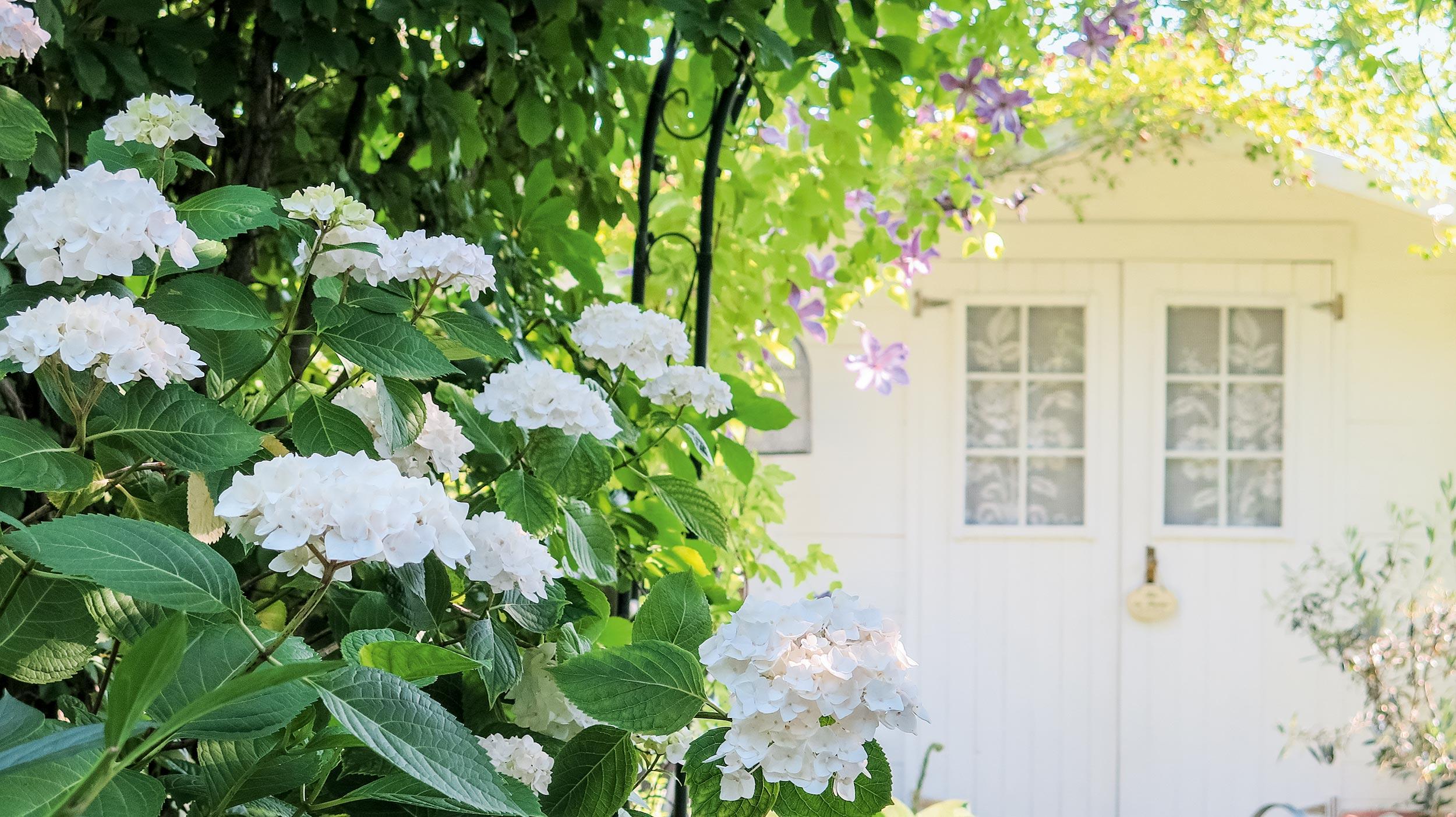 Hortensien für den Schattengarten