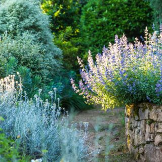 Trockenheit im Garten
