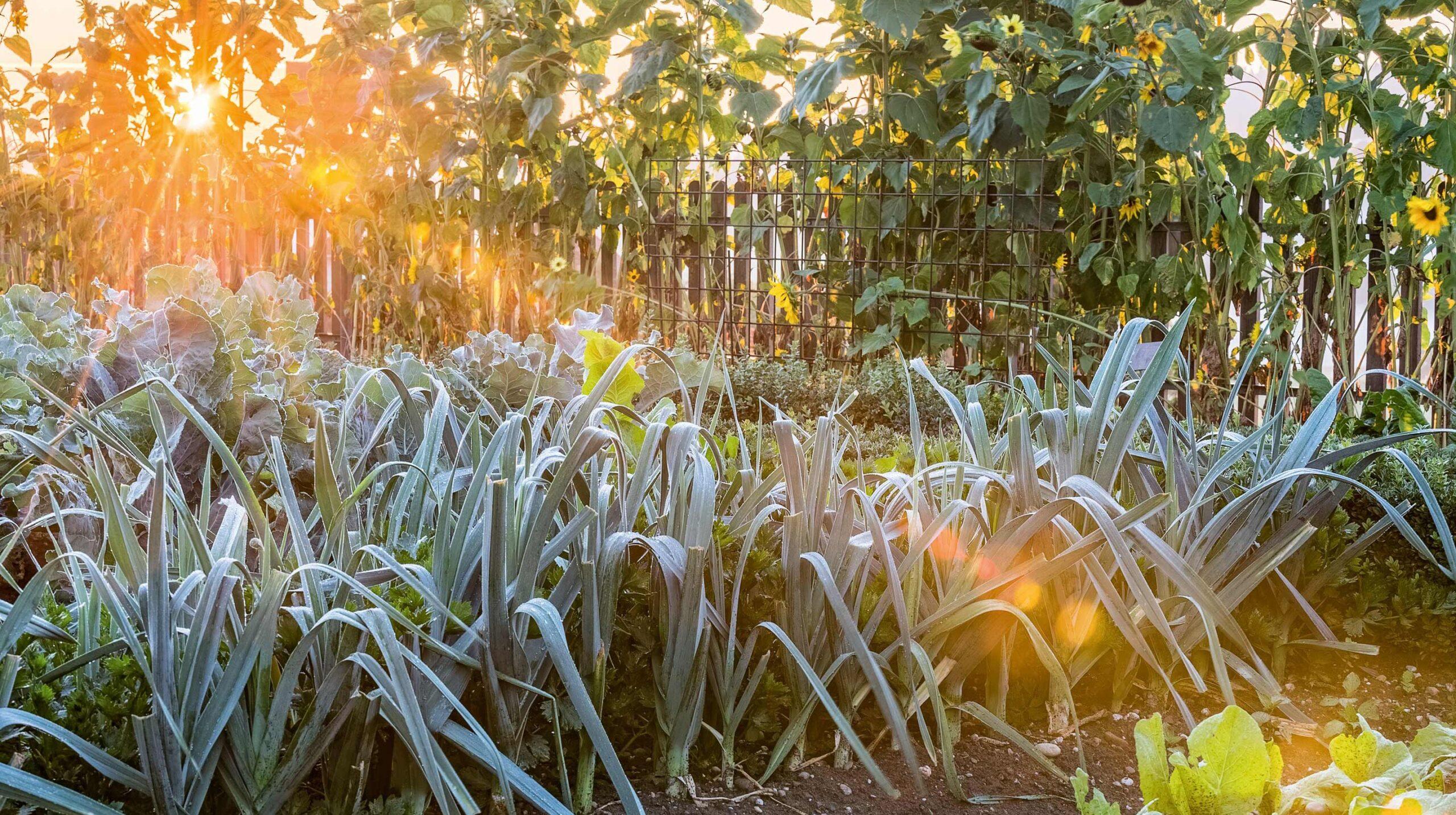 Herbstputz im Bauerngarten