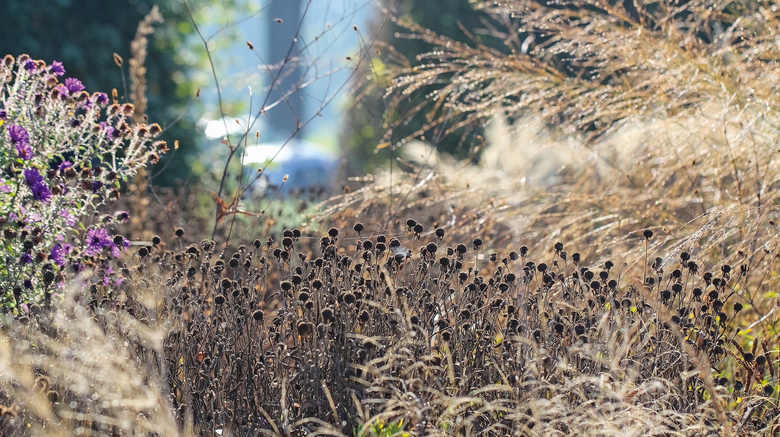 Staudenschnitt – im Herbst oder Frühling?